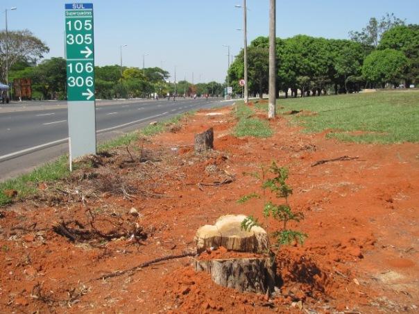 árvores cortadas no eixão sul